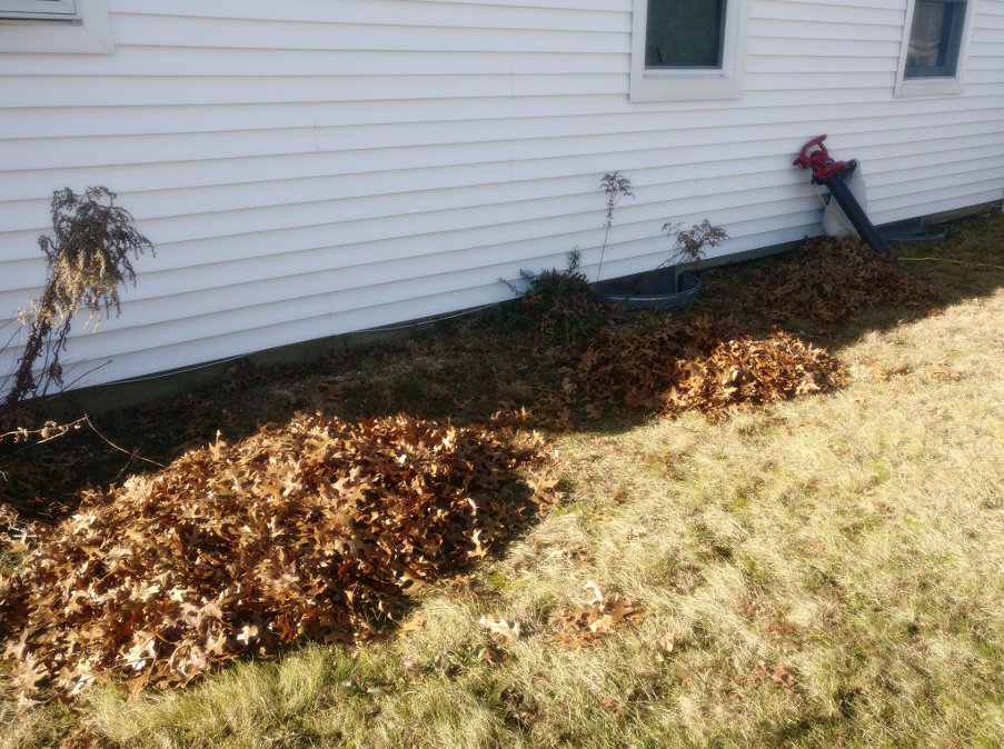 winter_leaf_pile.jpg